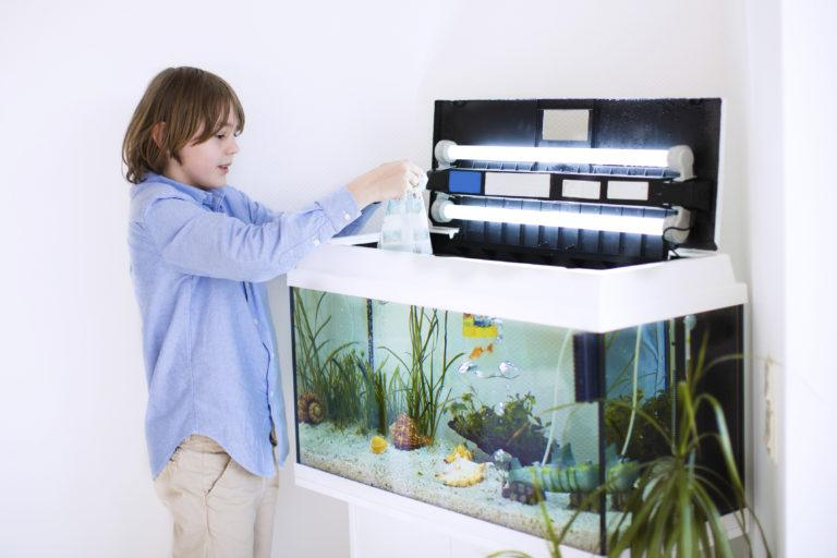 Comment choisir son aquarium