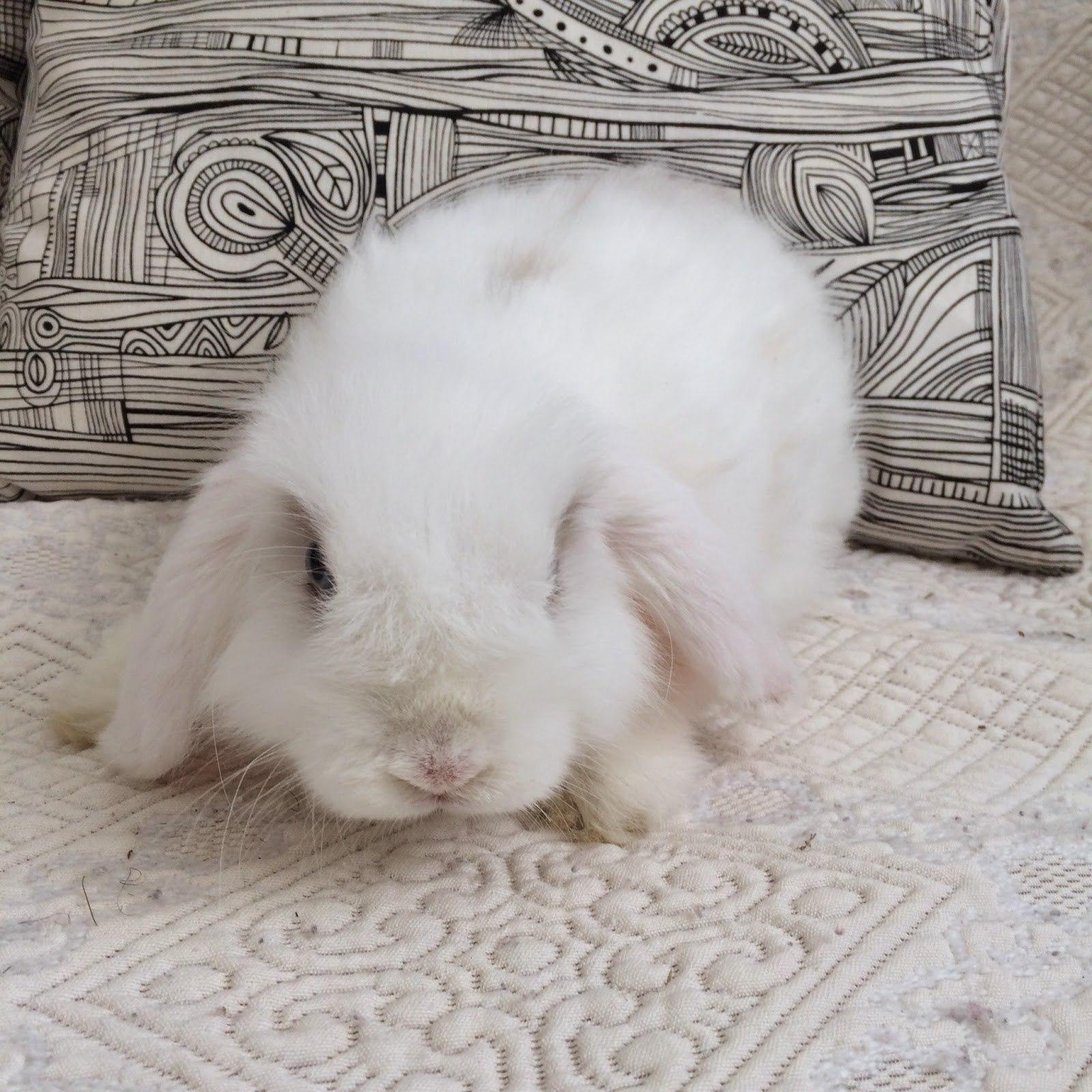 Bonnes raisons pour adopter un lapin