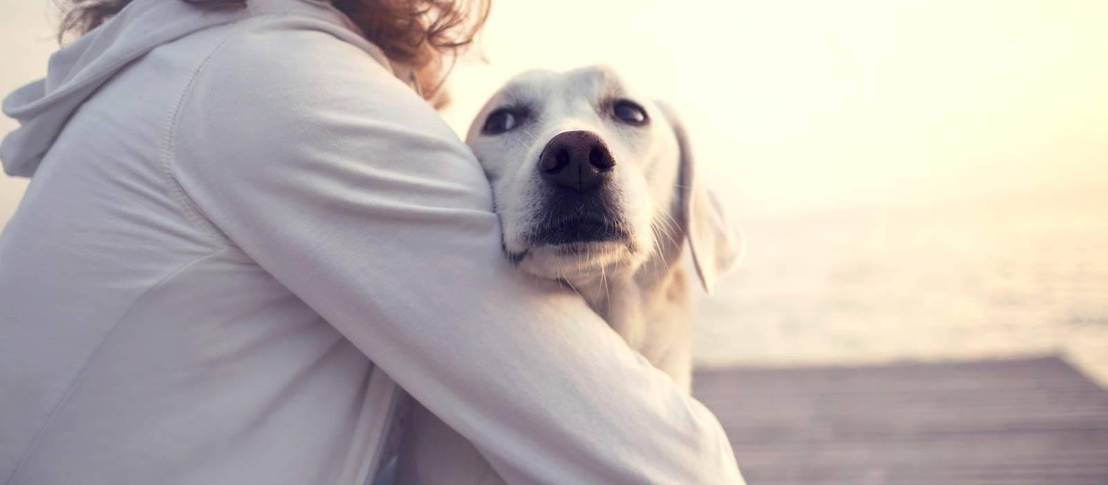 santé-animaux-chien