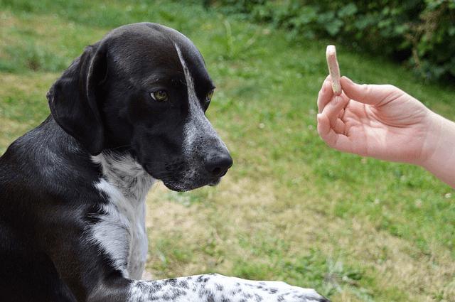 Comment faire obéir son chien ?
